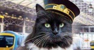 felix il gatto del treno